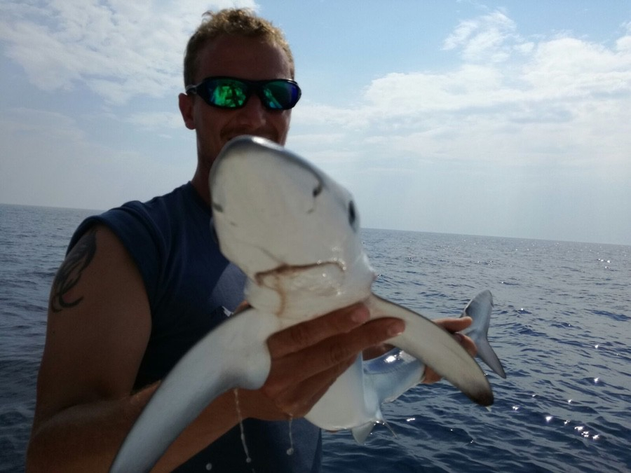 sharks-014-2017